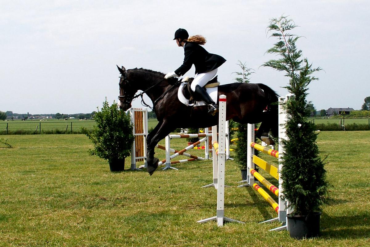 Horse Riding, Holiday Accommodation, Lambourn, Berkshire, UK